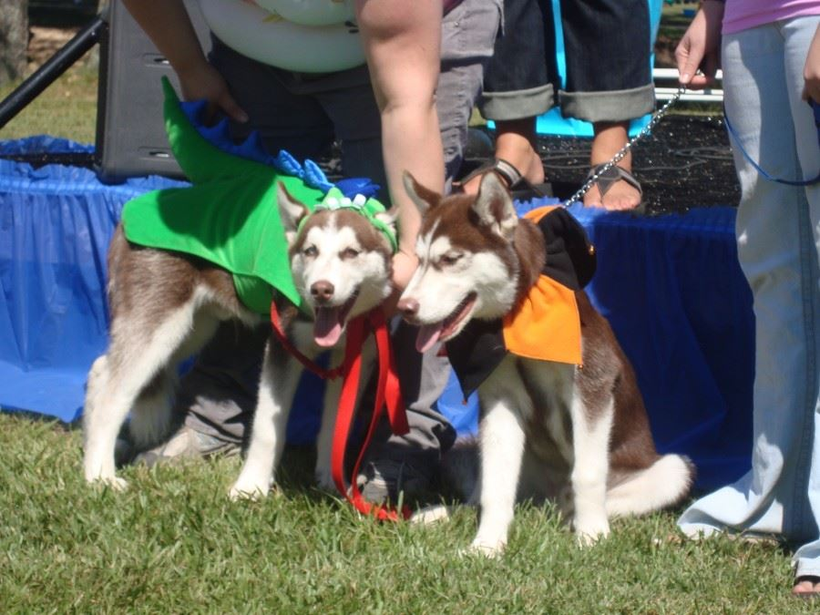 Bark in the Park 03